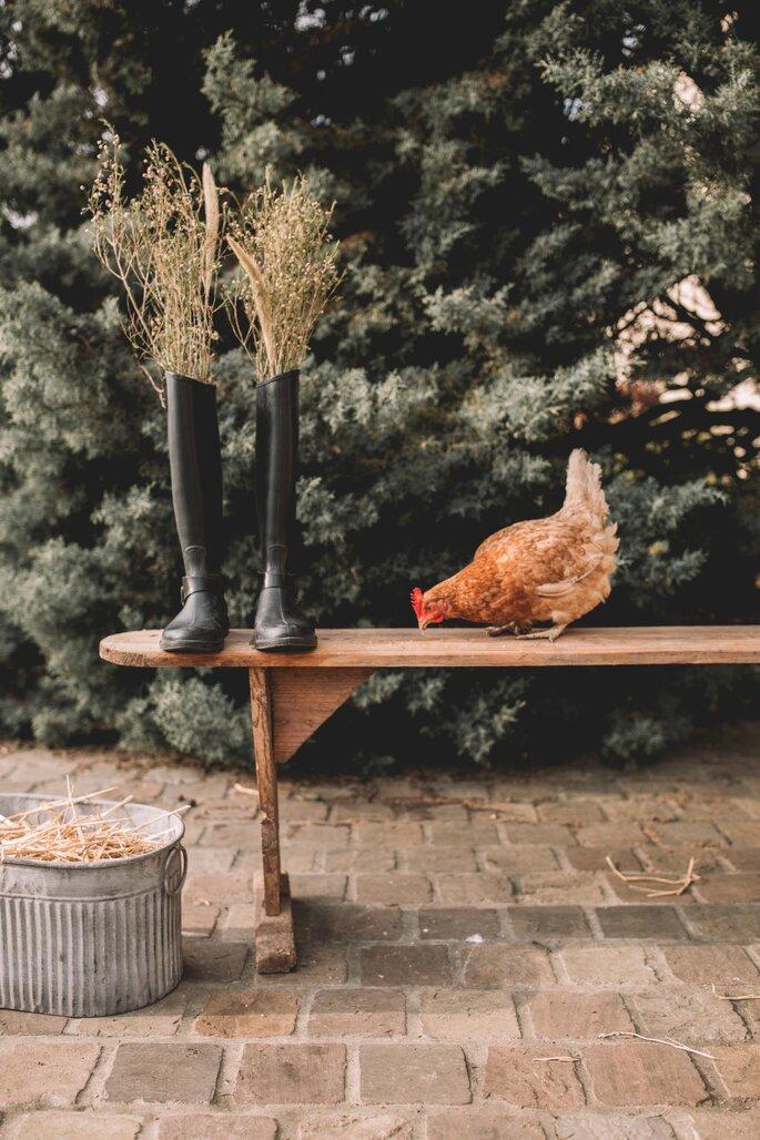 Une poule picore sur un banc à côté d'une paire de bottes de jardin