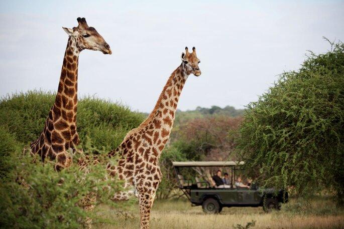 Camp Jabulani Safari