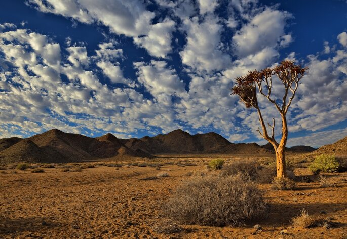 Photo via Visualhunt - richtersveld-south-africa-desert-dry-hot-tree
