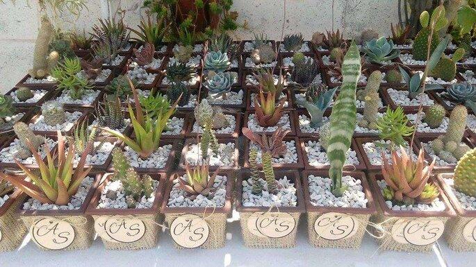 Maru Cactus