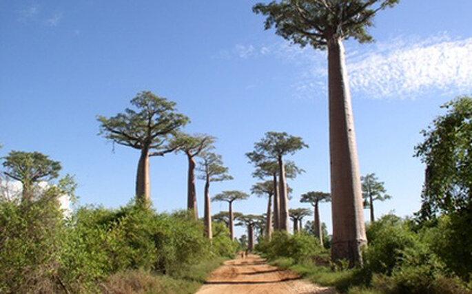 Voyages de noces Madagascar