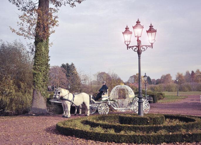 Hochzeitspferde – Wedding horses