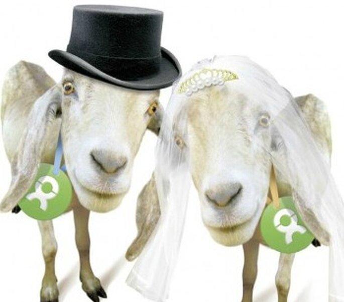Einziegartige Hochzeitsgeschenke Oxfams Ziegen Zum Verlieben