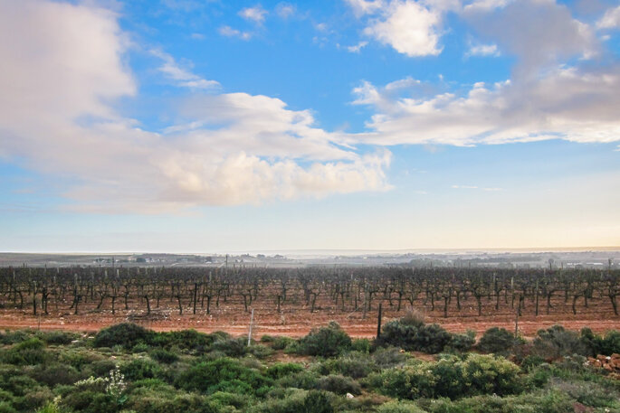 Photo : VisualHunt - Vineyards of Lutzville, South Africa