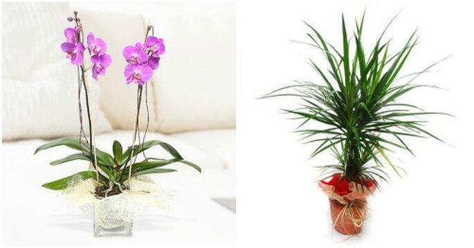 prezenty zamiast kwiatów