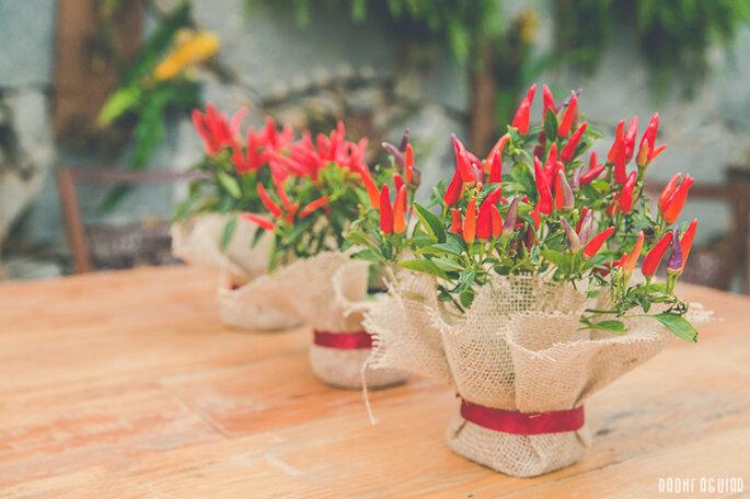 Vasinhos de pimenteiras