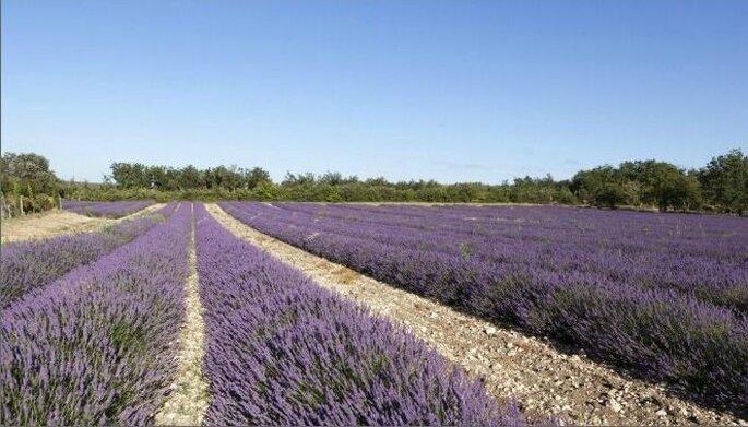 Domaine de Sarson - Lieu de réception de mariage - Provence