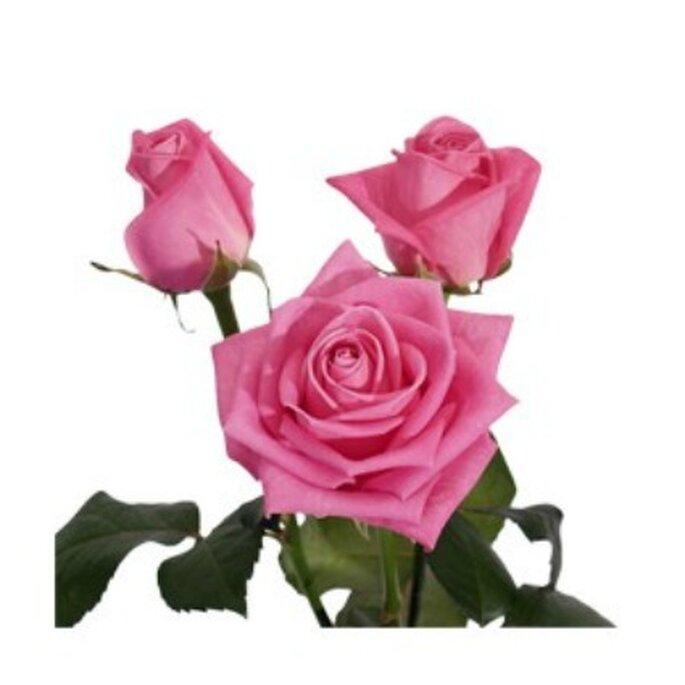 Rose Aqua rose - Réalisation Fleurs-a-l-unite.com