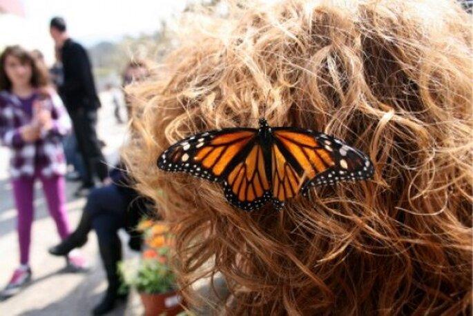 An der Hochzeit Schmetterlinge fliegen lassen - Foto: mariposeando