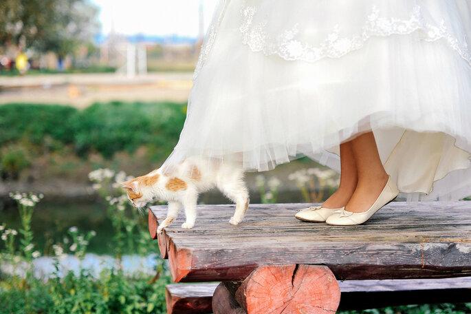 Die Grundverfassung erlaubt's - die Eheschließung zwischen Mensch und Tier ist nun rechtens. Foto: Shutterstock