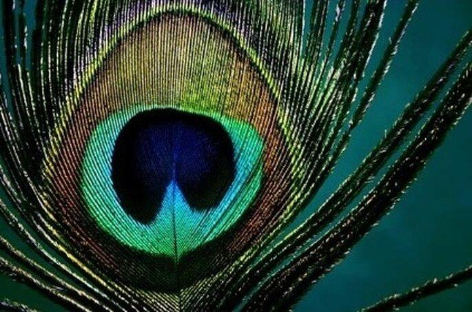 Inspirez vous de la plume de paon pour votre mariage - Plume de paon dessin ...