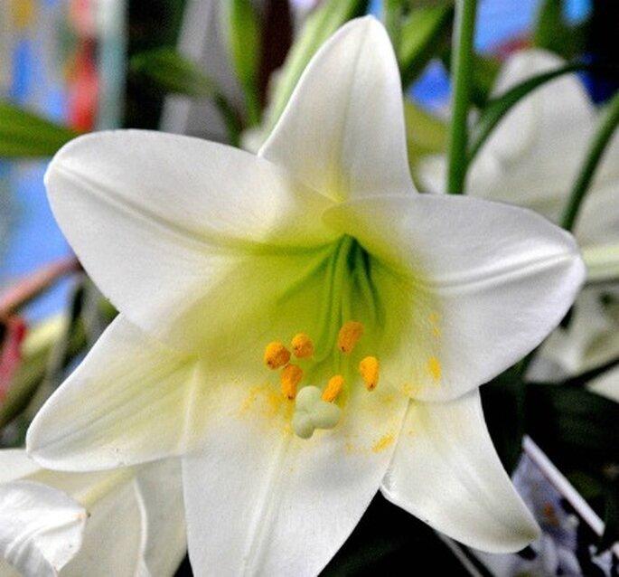 Flor blanca de bambú    Foto: KSD Photography