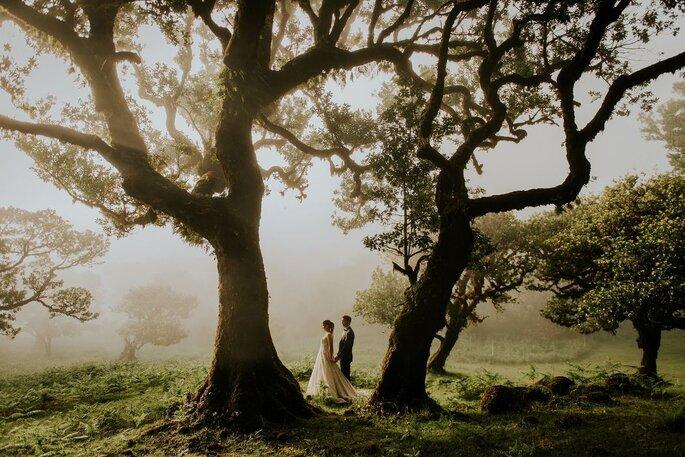 noivos numa floresta com névoa