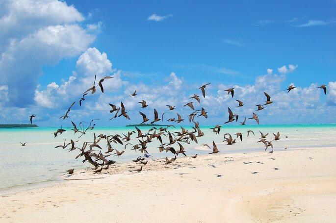 Singulares destinos polinésios para a sua lua de mel