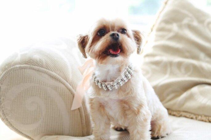 6 tips para incluir a tu mascota en la boda - L & L Style Photography