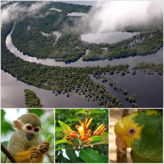 El Amazonas: un destino inolvidable para tu luna de miel. Fotos: Jason Auch, Luc Viatour y Obsidian Soul