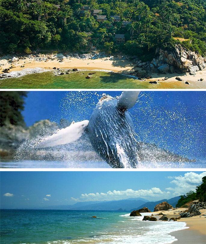 Hermosos paisajes en las playas de Puerto Vallarta - Foto: Xinalani