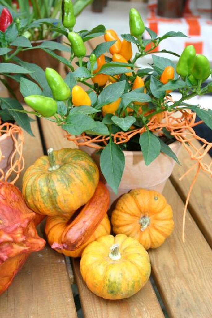 Mini-Kürbisse sind tolle Gestaltungskünstler für eine Tischdeko zur Hochzeit im Herbst! - Foto: Katharina Scherer_pixelio.de