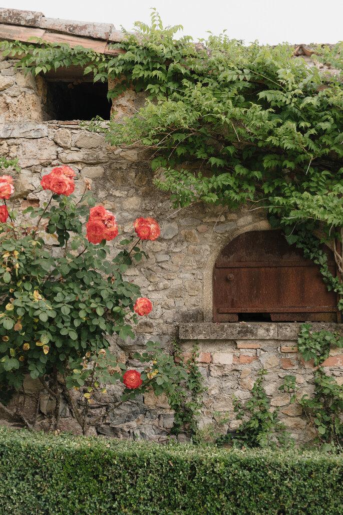 Joli mur de pierre orné de roses et de lierre
