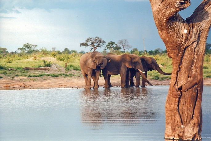 Foto: Hwange National Park | Web