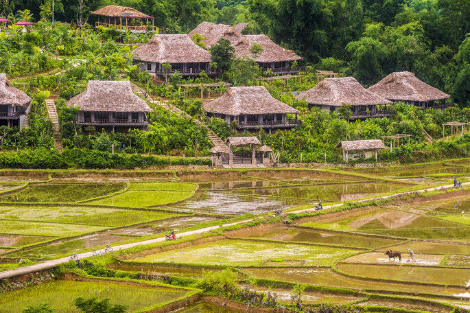 Le Vietnam, ses rizières, ses champs de manioc, propices à la rêverie. Crédit : Mai Chau Ecolodge