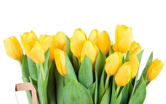 """Considera para la decoración una flor exótica """"tulipanes"""""""