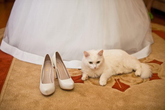 Der Katze verfallen: Schweizer Zahnarzthelferin setzt die Hochzeit mit ihrer Olivia vor Gericht durch. Foto: Shutterstock
