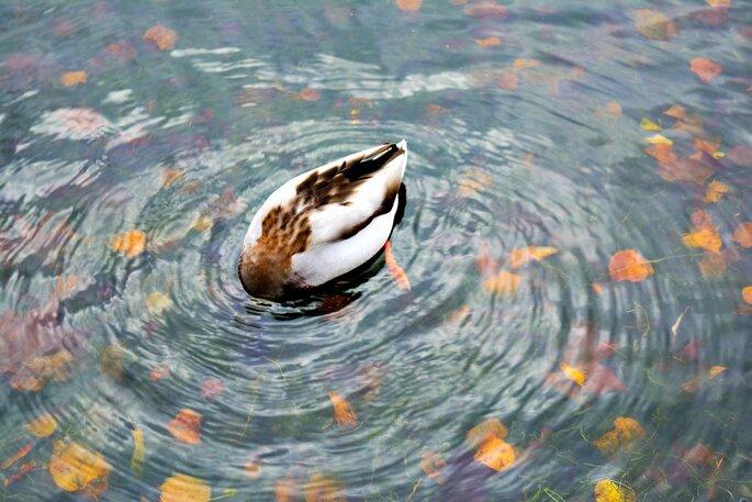 Victory Park London See mit Ente im Herbst