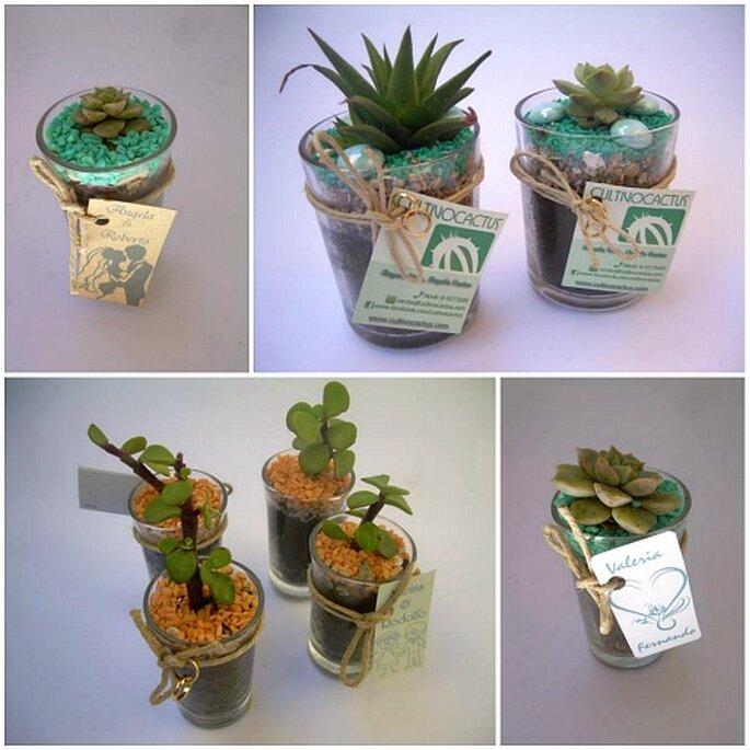 plantas pequeas para regalar