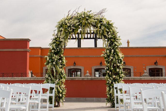 Macadamia Flores