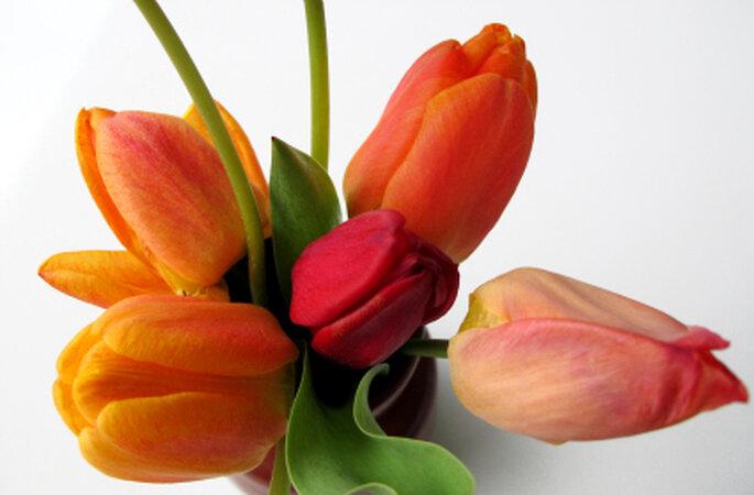 Tulpen gibt es in den allerschönsten, strahlendsten Farben. Foto: Brigitte Bollinger / pixelio.de