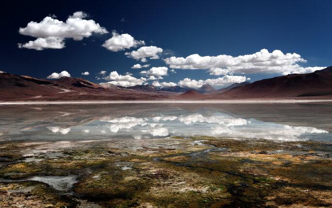 A Altiplano au Chili