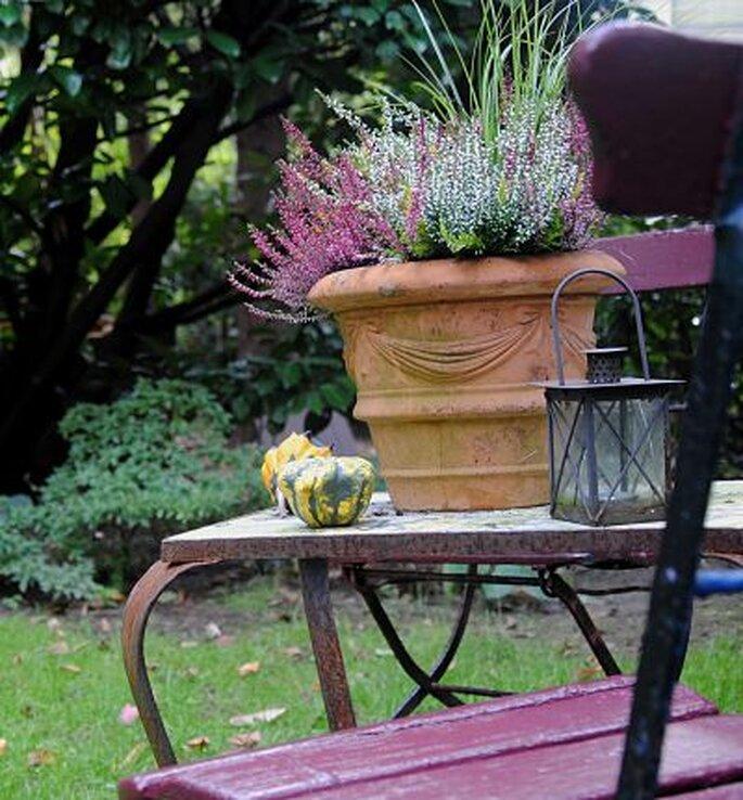 Blühende Erika sorgen für die Farbtupfer zur Herbsthochzeit Foto: Klaus Steves_pixelio.de