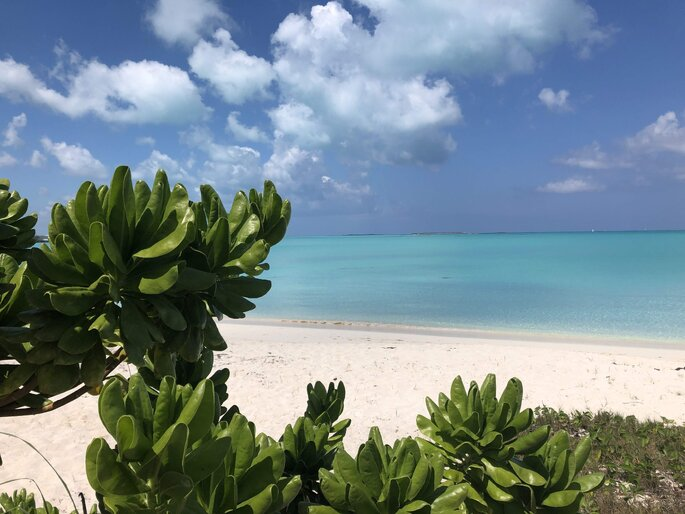 So Traveling, agence de voyage, plage paradisiaque bordée de végétation