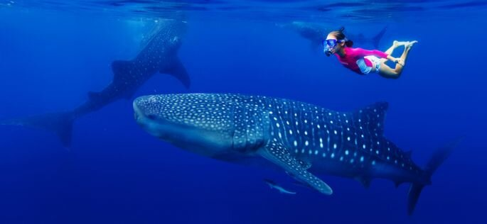 Shutterstock: Max Topchii