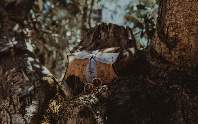 alianças de casamento num tronco de árvore