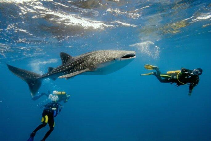 Mozambique bazarutho diving