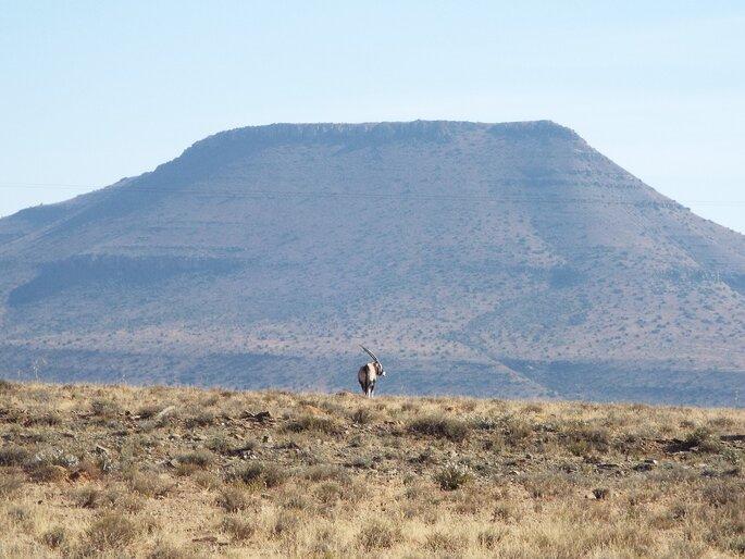 Photo : Échappée Australe - Karoo