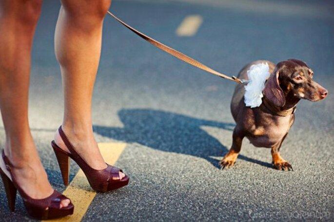 Tu perro y tú en la Boda. Imágen Bianca Valentim