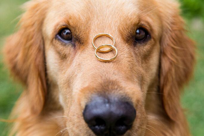 Cachorro com alianças