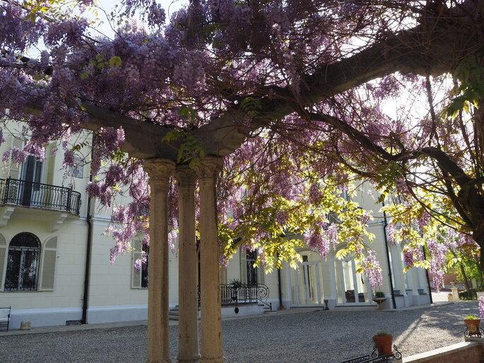 Alberi in fiore ai Giardini La Pergola