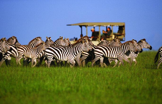 Safári na África. Foto: TM Travel