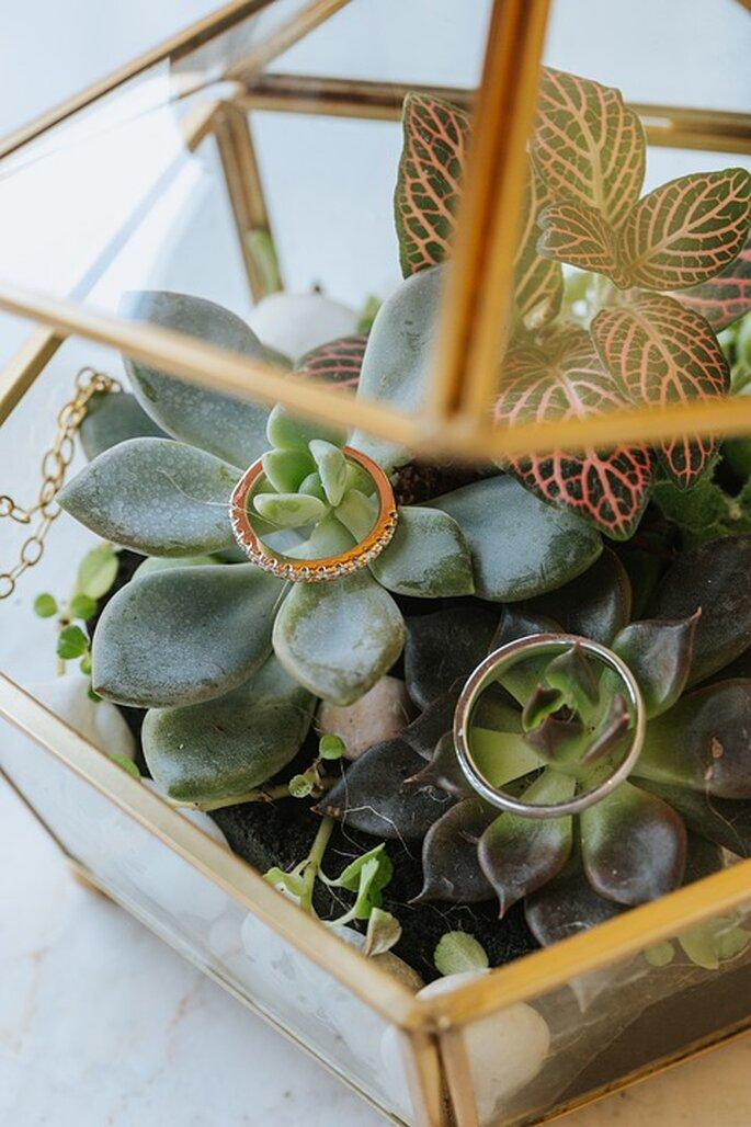 Nouveau Chapitre - Alliances disposées dans une boite en verre avec des plantes