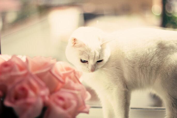 Eine Ehe zwischen Mensch und Katze bedeutet auch große Verantwortung für das Tier. Foto: Shutterstock