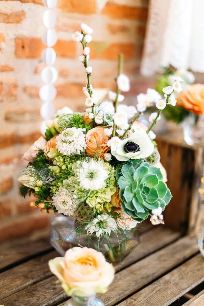 Photo : Studio 8 - Camomille Flowers