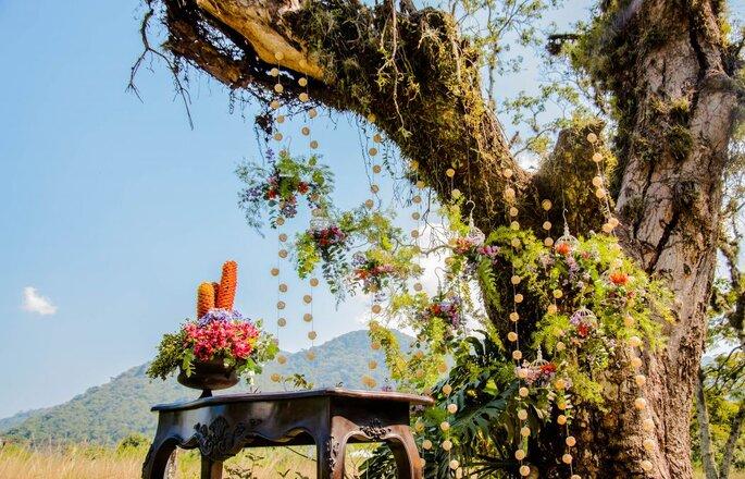 Natureza como parte da decoração