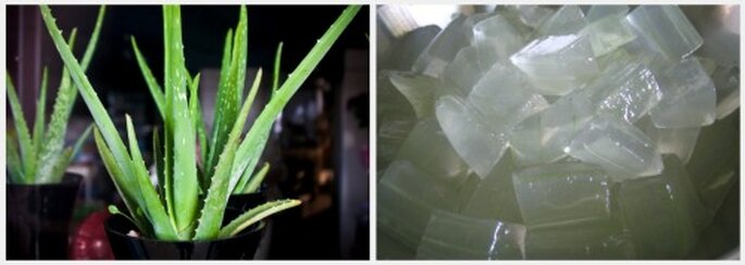 El aloe natural puede ser mas efectivo que otros productos cosméticos. Fotos: Flickr Garry Knight y Food Trails