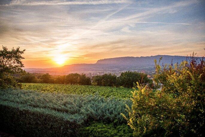 Un coucher de soleil sur les vignes