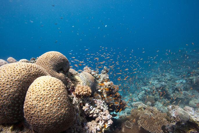 Aqua Images