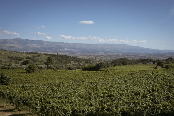 vinhedo Quinta da Cerca